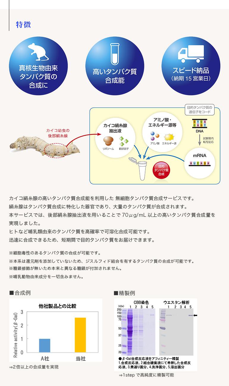 無細胞タンパク質合成サービス